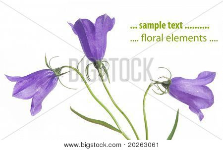 beautiful purple flower against white background. useful design element.