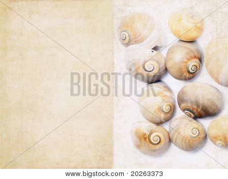 lovely background image with sea shells