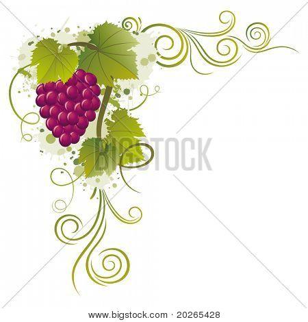 fronteras de uva vector