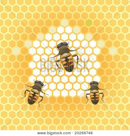 vector illustration-honey bee and honeycomb