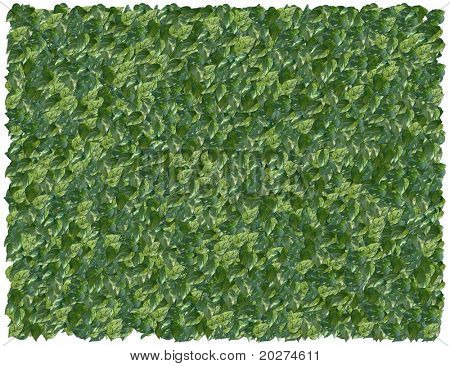 Variegated Philodendron background. From The Floral background series
