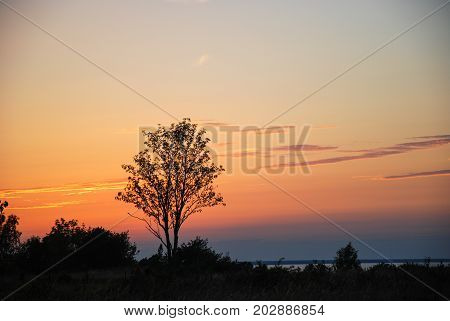 Landscape with a single tree by a colorful sunset