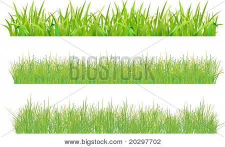Set grass. One sample with large thick stems, and two variants with thin stems (grass field). Samples with thin stems to distinguish the direction of growth of grass and density. Vector image.