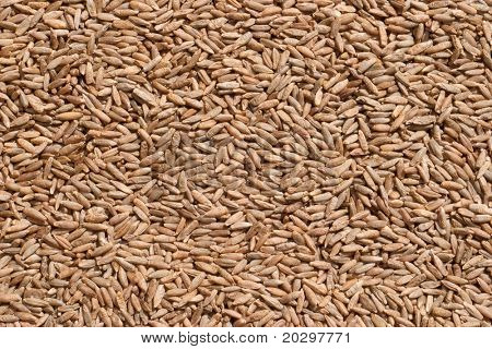 Seeds of rye closeup. Direct sunlight is to emphasize the texture of seed