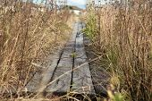 Wooden Footpath poster