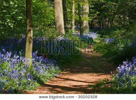 Path Through Bluebell Woods