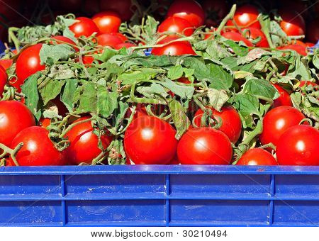 Box Of Ripe Red Tomatoes