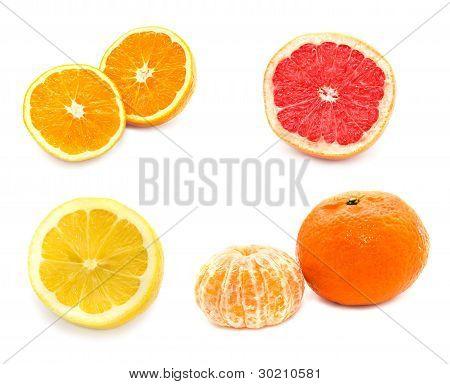 Collection Of Citrus Fruit Orange Tangerine Lemon Grapefruit