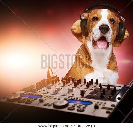 Beagle Hund tragen von Kopfhörern hinter dj-Mixer.
