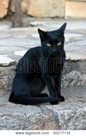 Black cat sitting at stone