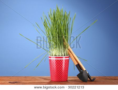 Green grass in a flowerpot on blue background