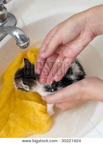 Kitten Bathtime