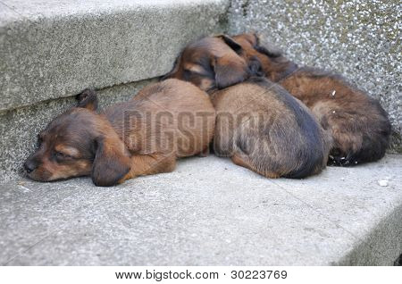 Abandoned Three Little Puppies