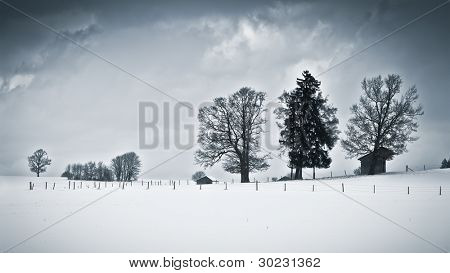An image of a nice winter scenery