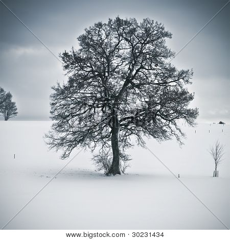 An image of a nice tree in a winter scenery