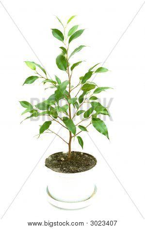 Little Growing Tree