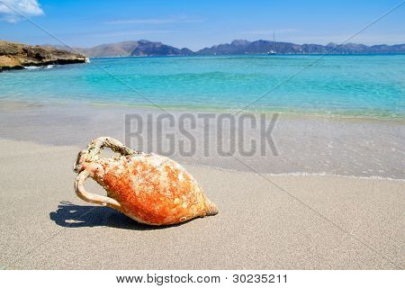 Alcudia Beach Mallorca with roman amphora on Mediterranean Balearic sea