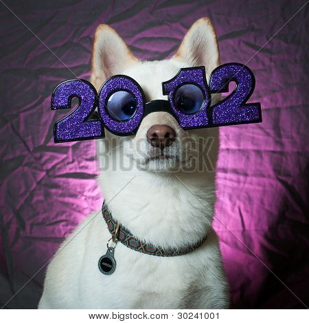 Happy New Year Puppy 2012