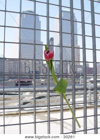 Flower Hope At Ground Zero