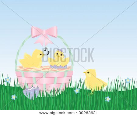 Easter Chicks are Born