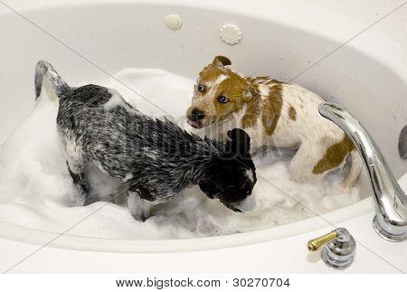 Pups taking a Bath.