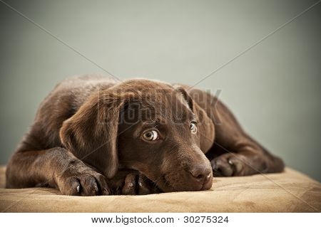 Puppy With Pity Look