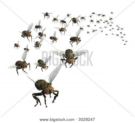 Swarm Of Flies