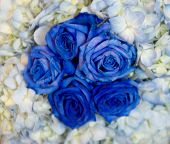 stock photo of rose flower  - Blue and white flowers - JPG
