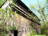 picture of tobacco barn  - 1940