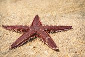 Starfish Lying On Sand. Starfish Lying On The Sand On The Beach. poster