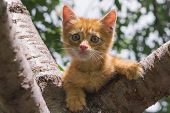 Ginger Kitten Sitting On A Tree Branch On A Sunny Summer Day. The Kitten Looks Into The Camera. Anim poster