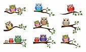 Vector Colorful Owl Sitting On Tree Branch Icons Isolated On Whie Background. Owl Bird Logo Graphic  poster
