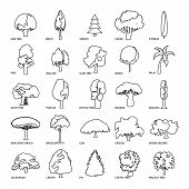 Tree Types Icons Set. Outline Illustration Of 25 Tree Types Icons For Web poster