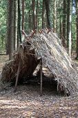 foto of hobo  - Survival Shelter in the forest - JPG