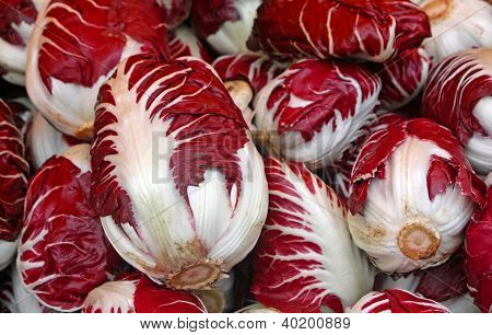 Red Radicchio Of Treviso For Sale