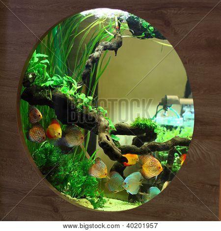 Acuario tropical con peces de colores