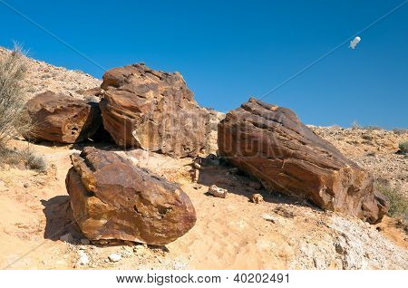 Ancient Petrified Wood.