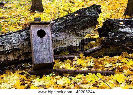 Fallen birdhouse