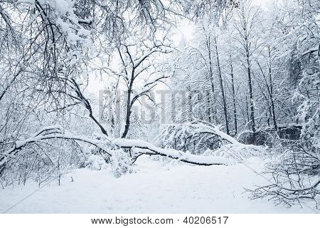 Heavy Snowfall