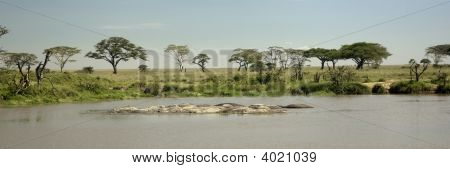 Hippo Pool At The Serengeti