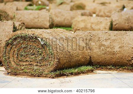 Turf Grass Rolls