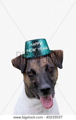 Cão com chapéu de feliz ano novo
