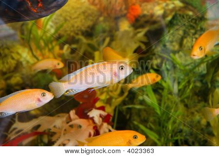 A Colourful Aquarium