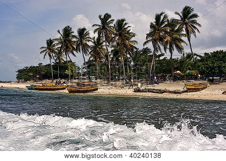 Ocean Work And Tree In Dominicana