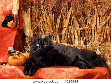 Halloween Black Cat
