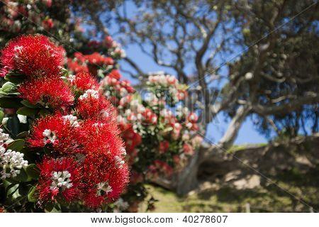 Red flowering tree.