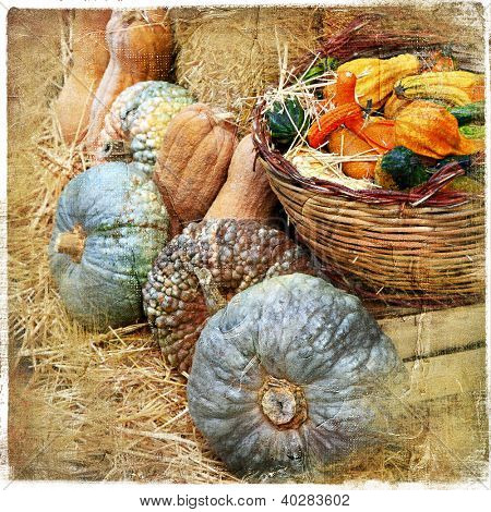 pumpkins on market - artisitic still life in retro style