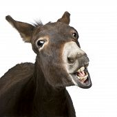 stock photo of donkey  - donkey  - JPG