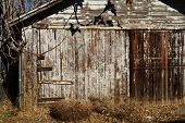 pic of hasp  - A rural garage in disrepair shows a locked door and tumbleweed blown against it - JPG