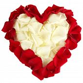 Beautiful heart of white rose petals surrounded by red petals isolated on white